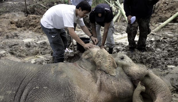 THAILAND TRAPPED ELEPHANT