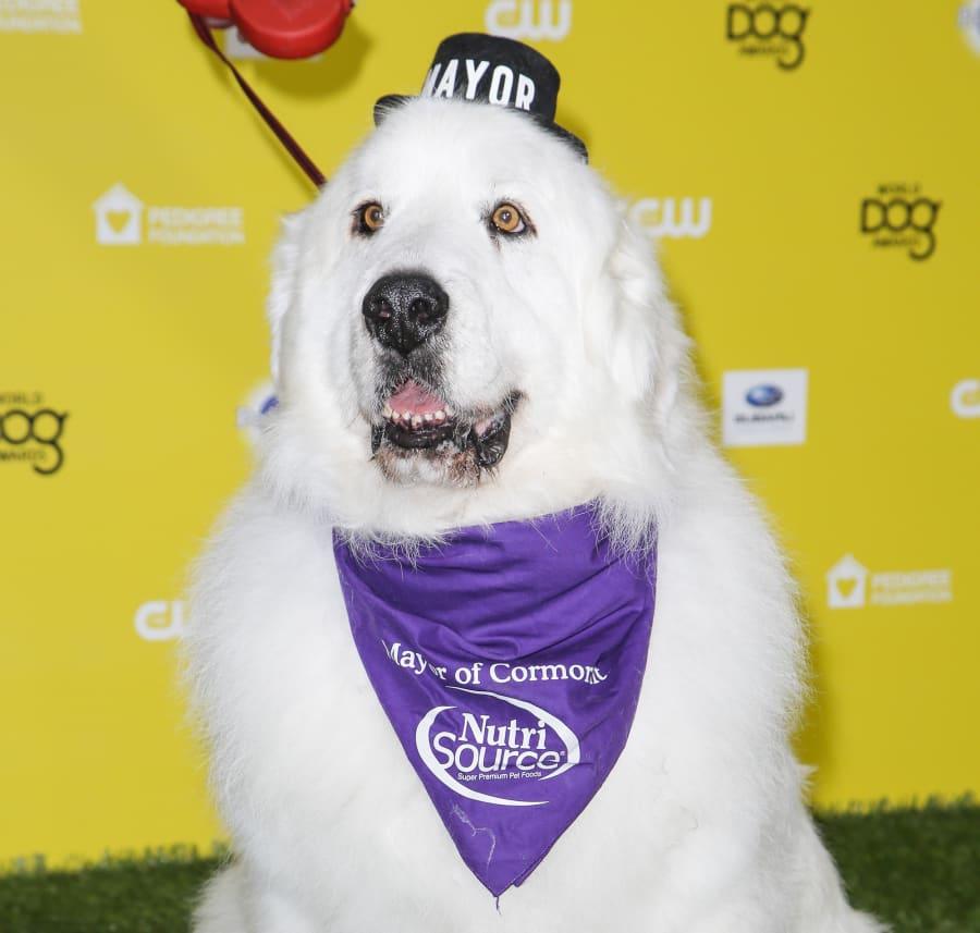 Duke, The Mayor arrives at The World Dog