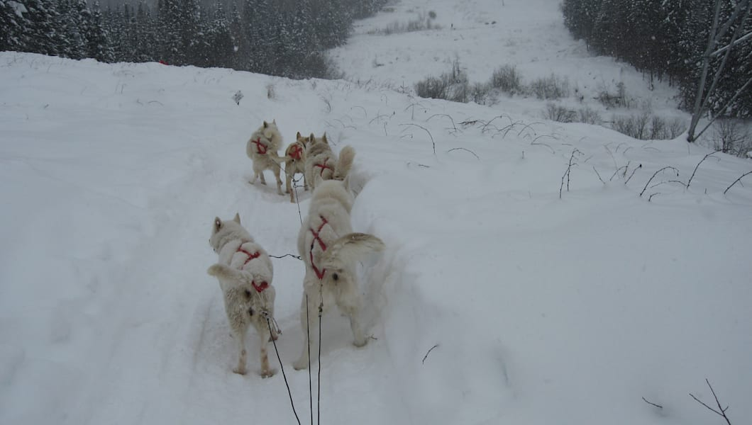 A snow-filled view of our dog sled team