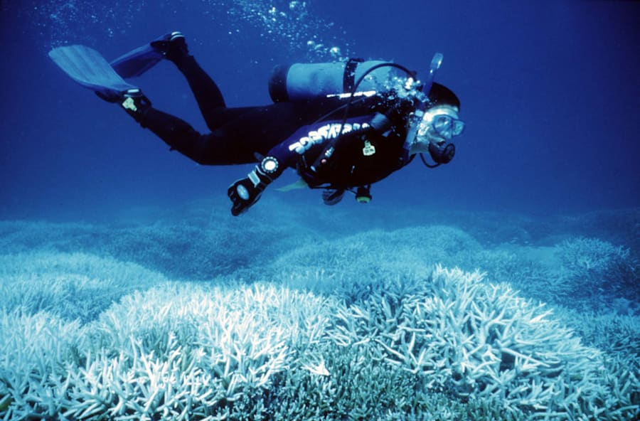 Bleached coral loses its colourful