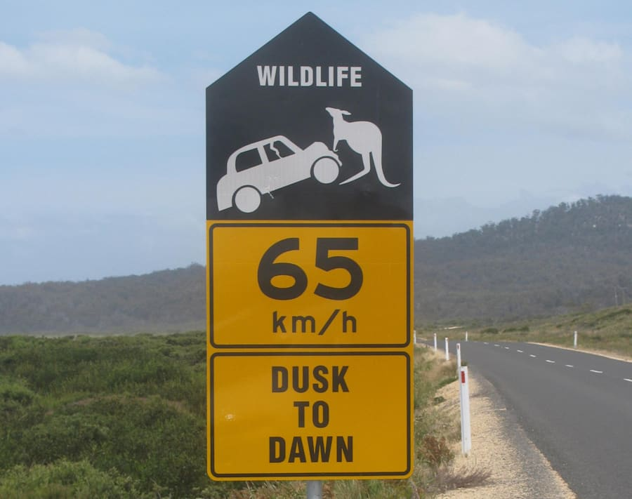 This Simple New Road Rule Could Help Save Our Native