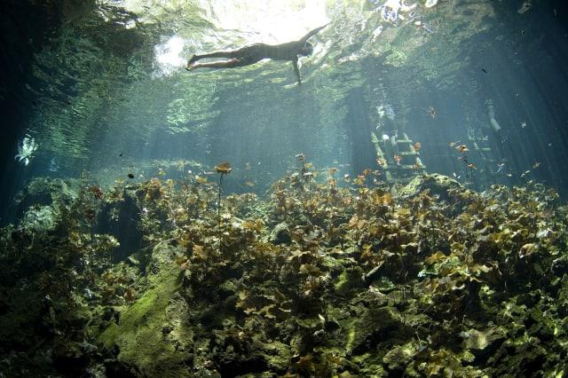 Snorkeler in Cenote dos Ojos entrance, Mexican riviera maya near Playa del Carmen, Cancun and Tulum, Mexico