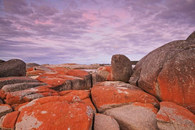 Red Lichen on Rocks, Bay of Fires, Bay of Fires Conservation Area, Tasmania, Australia