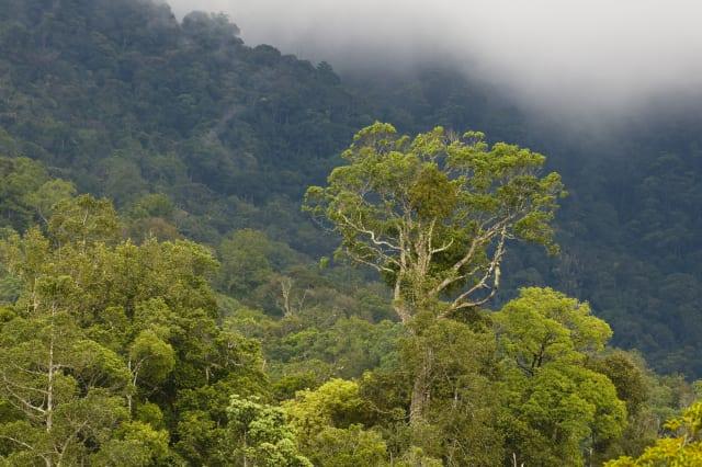 Montane rainforest, Mount Kinabalu, Sabah, Borneo, Malaysia