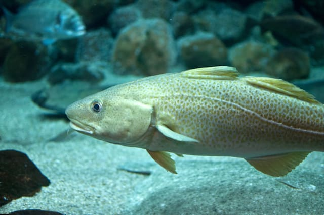 Do fish really have regional accents?