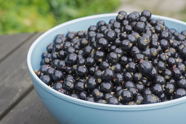 Blackcurrants in bowl outdoors