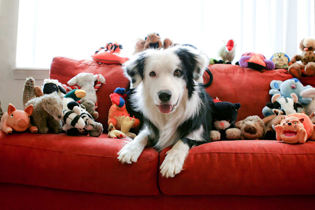 Dog and Toys