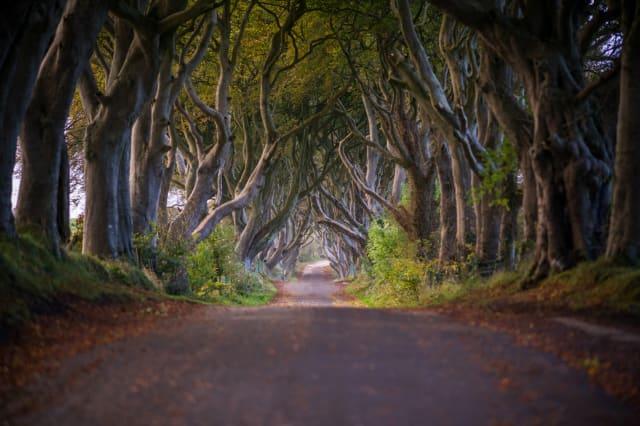 Road through The Dark Hedges