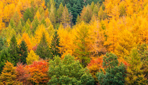 Autumn Forest Trees, Lake District