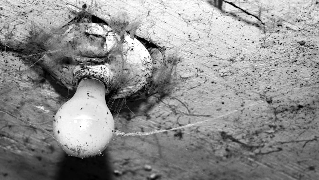 eerie looking bulb covered in...