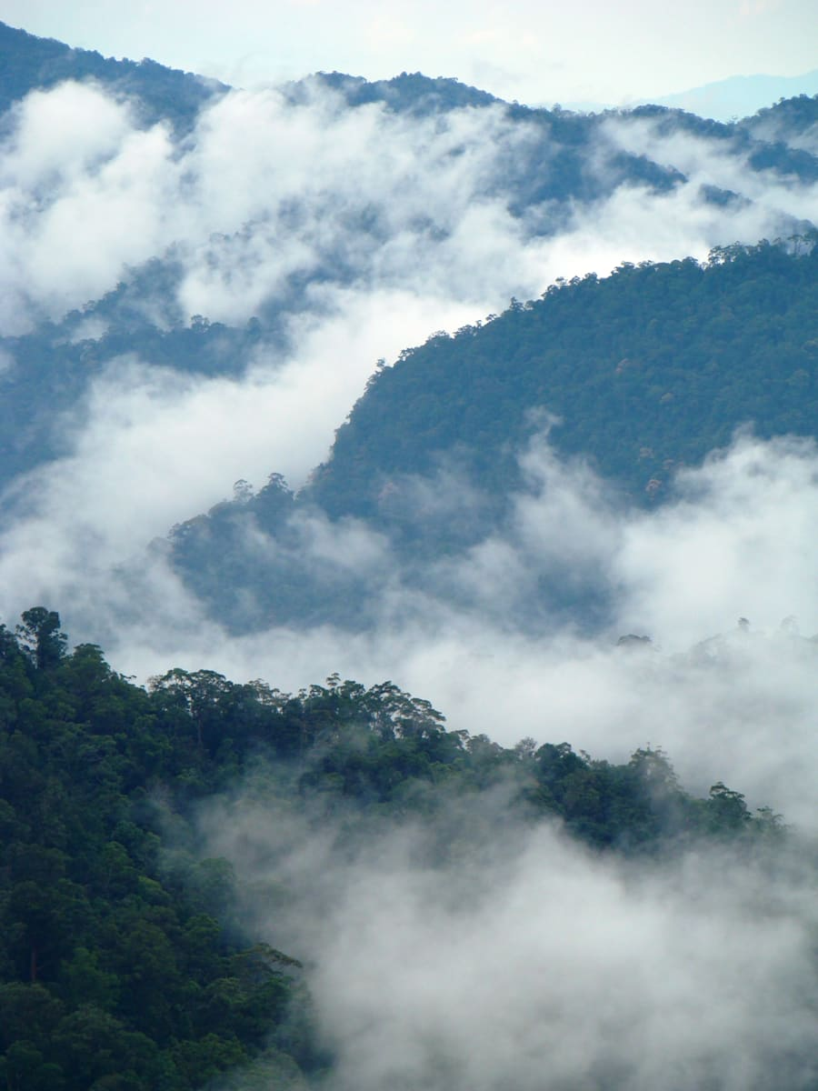 A dawn mist rises over a rainforest in Peninsular