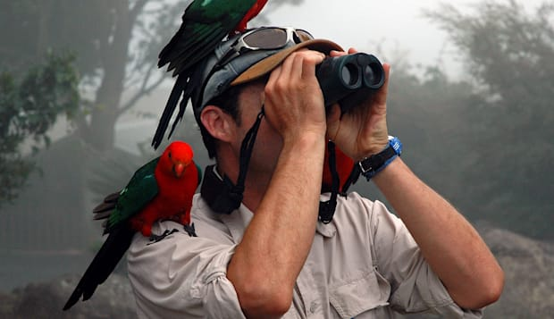 Bird watching with king parrots and binoculars