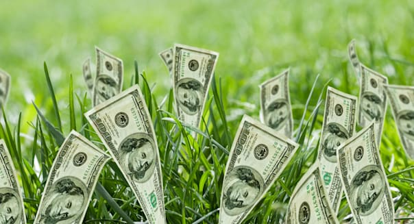 BX04P6 100 dollar bills growing in grass Annuity 100; dollar; bills; growing; grass; achievement; cash; close; up; color; image;