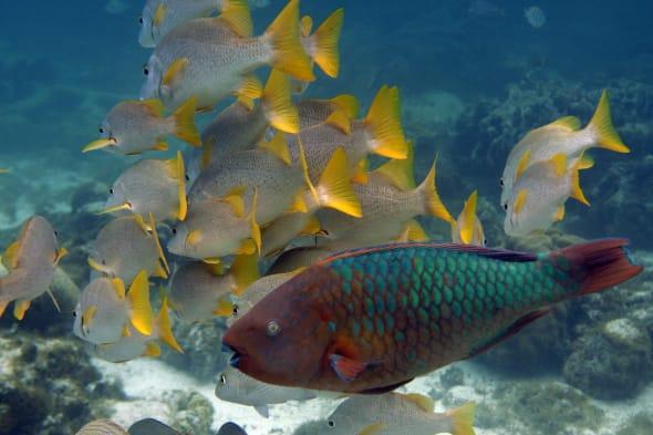 Travel Trip Belize Underwater