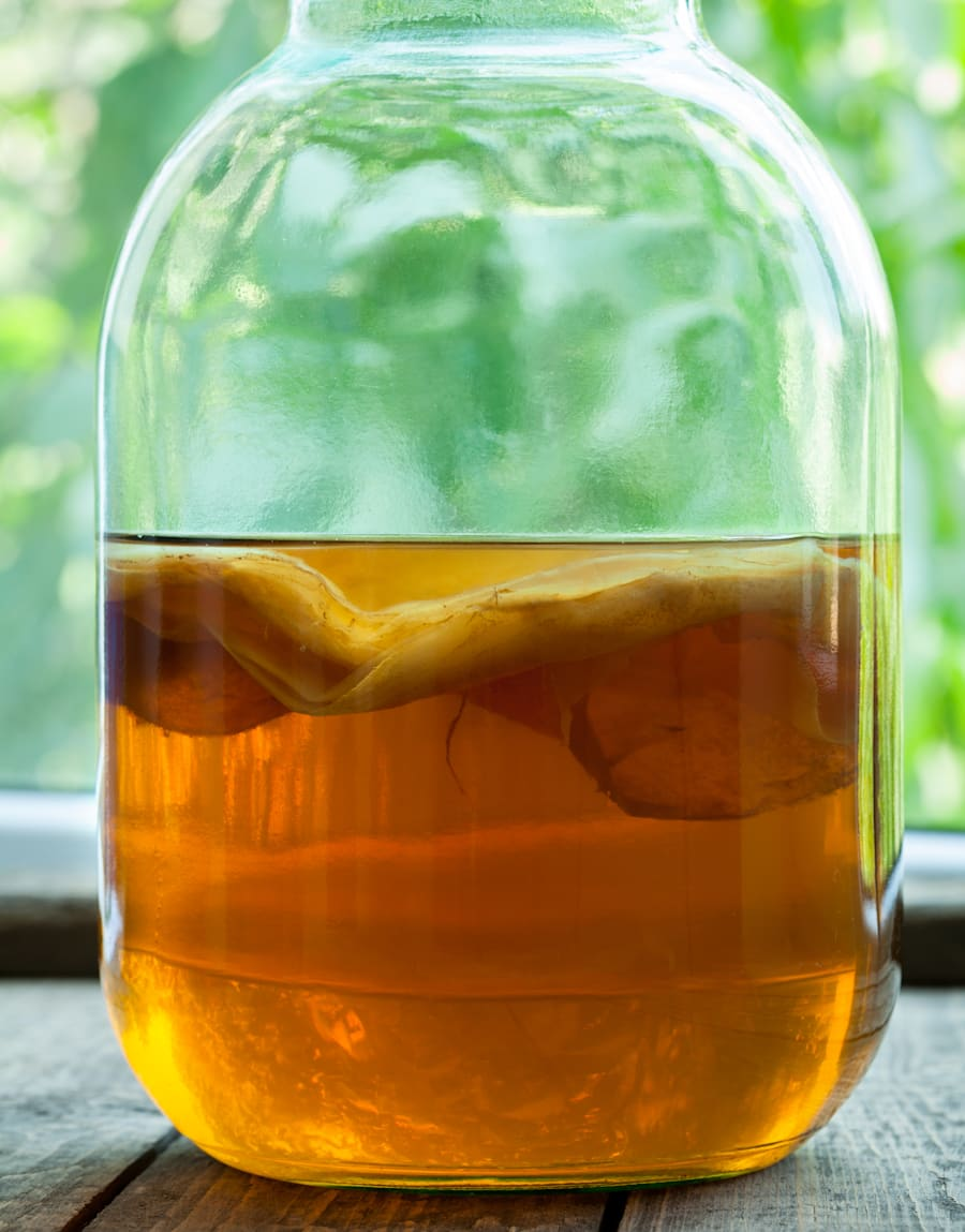 Try not to be too grossed out, but this is a SCOBY (Symbiotic Culture of friendly Bacteria and