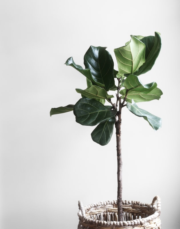 So, You Want To Get Some Indoor Plants? Here's Where To