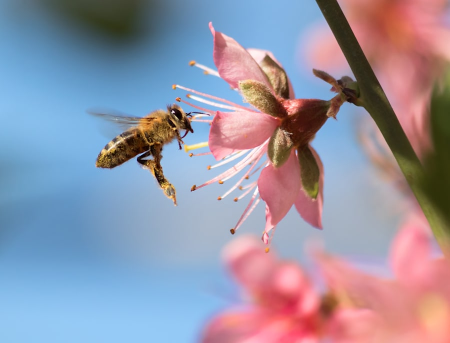 Bee pollen is food for young bees and is approximately 40 percent
