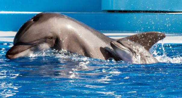 APTOPIX Baby Dolphin