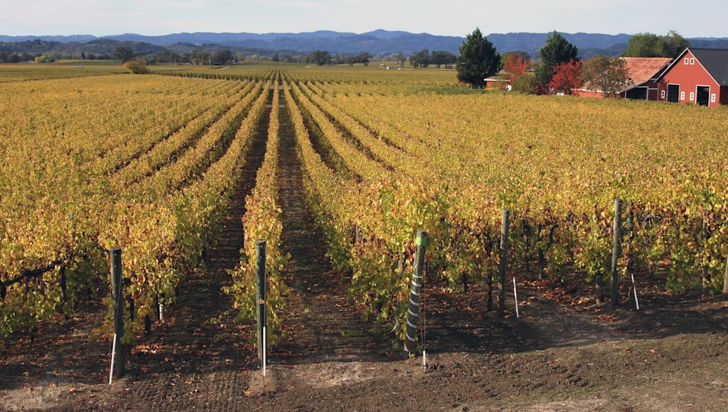 vineyards  russian river valley ...
