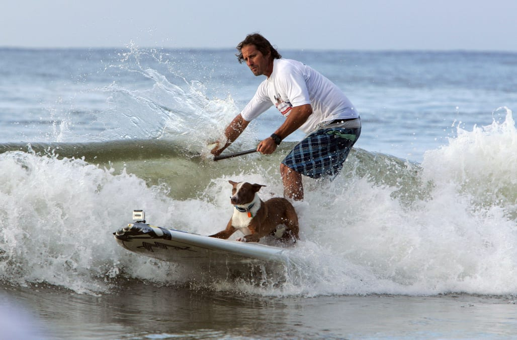 VetShopAustralia.com.au Surfing Dog Spectacular