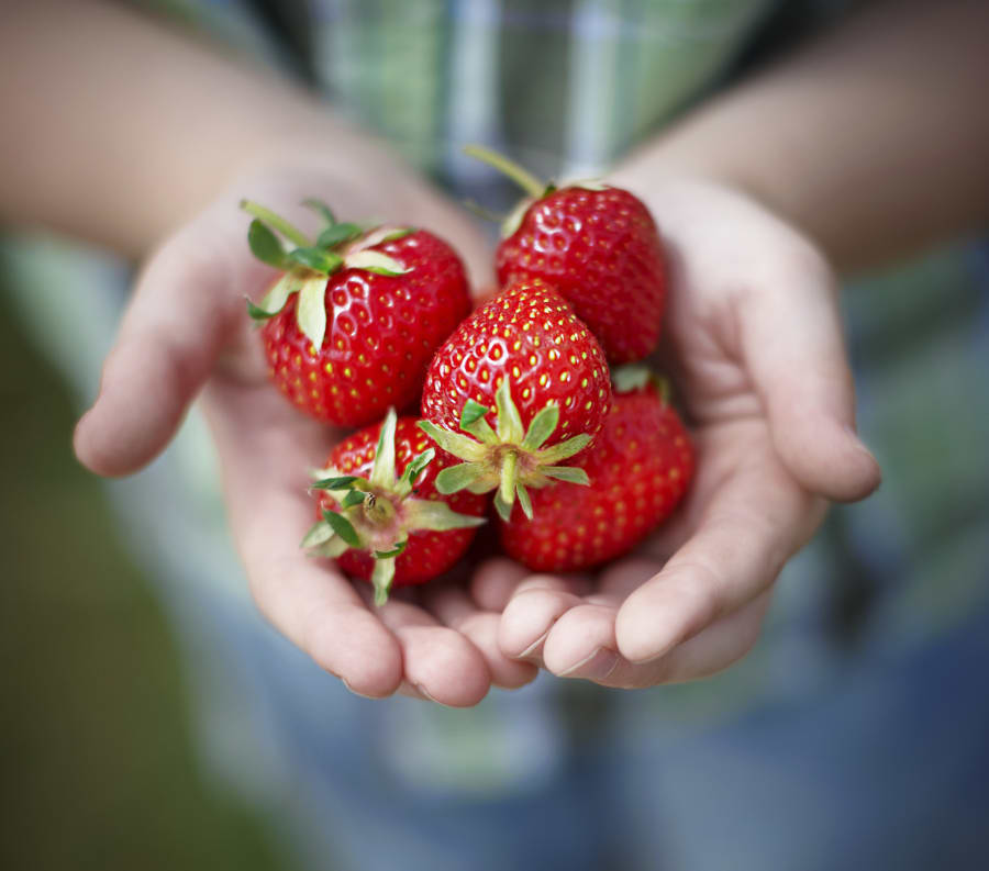 Berries are low in sugar and high in
