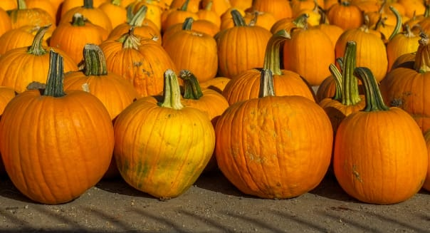 US-FEATURE-HALLOWEEN-PUMPKINS