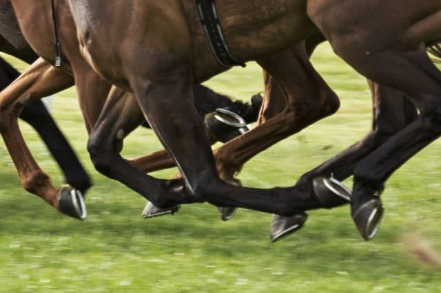 horses hooves taken at horse race