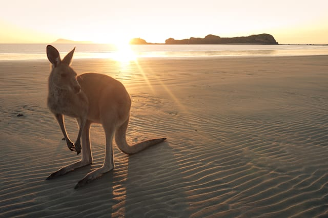 Kangaroo On Beach Against Sky During Sunset