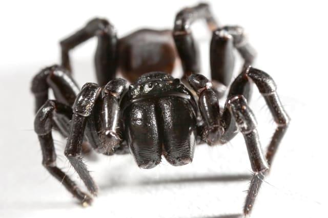 Boy survives bite by one ofworld's deadliest spiders in Australia