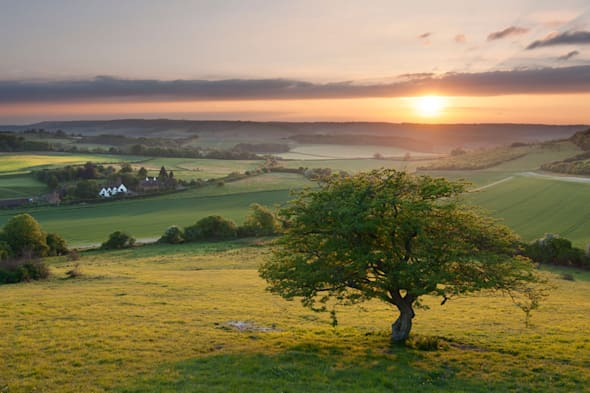 An idyllic English countryside scene at sunset; a lone tree overlooks a cottage in the North Kent Downs.