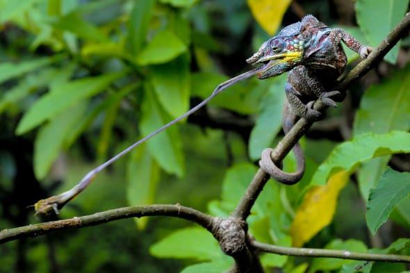 Zoological Society of London (ZSL) Animal Photography Prize