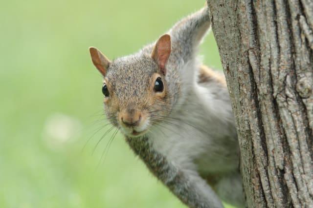 Unusual insurance claims: pesky squirrels