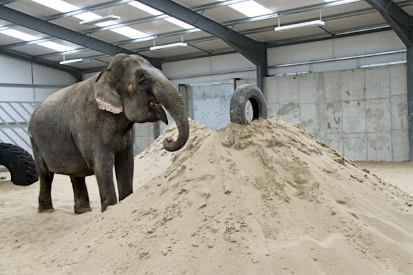 New home for saved circus elephant