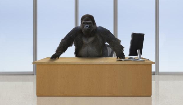 Gorilla CEO