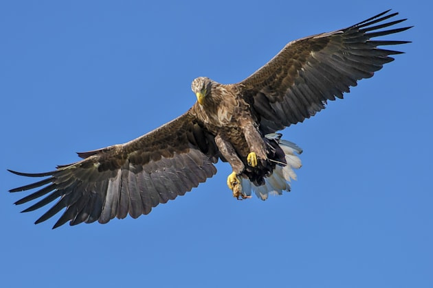 Be eagle-eyed when you're near one of these birds of
