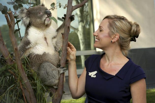 Greens Senator Larissa Waters poses with Winston the koala outside Parliament House on April 26, 2012...