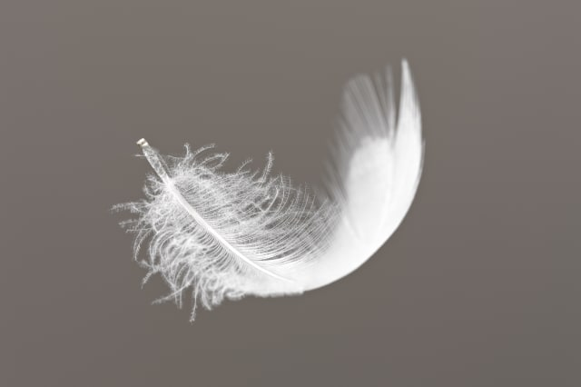 Feather floating on gray background