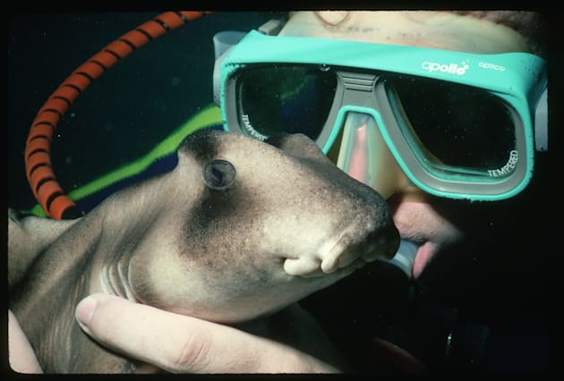 Port Jackson Sharks are more darling, than