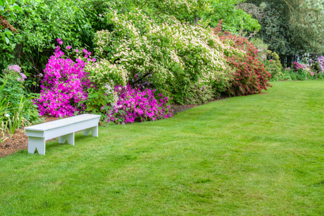 a garden scene with blooming...