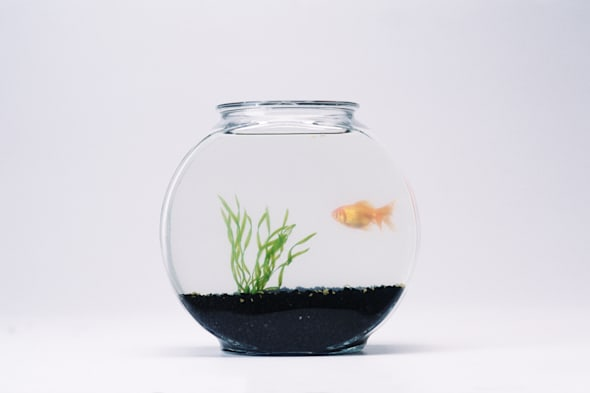 OS05066.TIF Fish Bowl visual symbols,object series 5,CMCD,Clement Mok,fish bowl,goldfish,water,glass,containers,pets,orange,swim