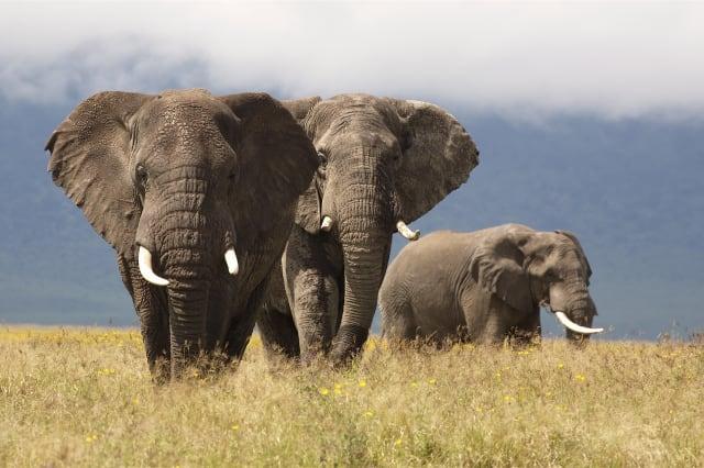 Elephant at Ngorogoro Crater, Tanzania