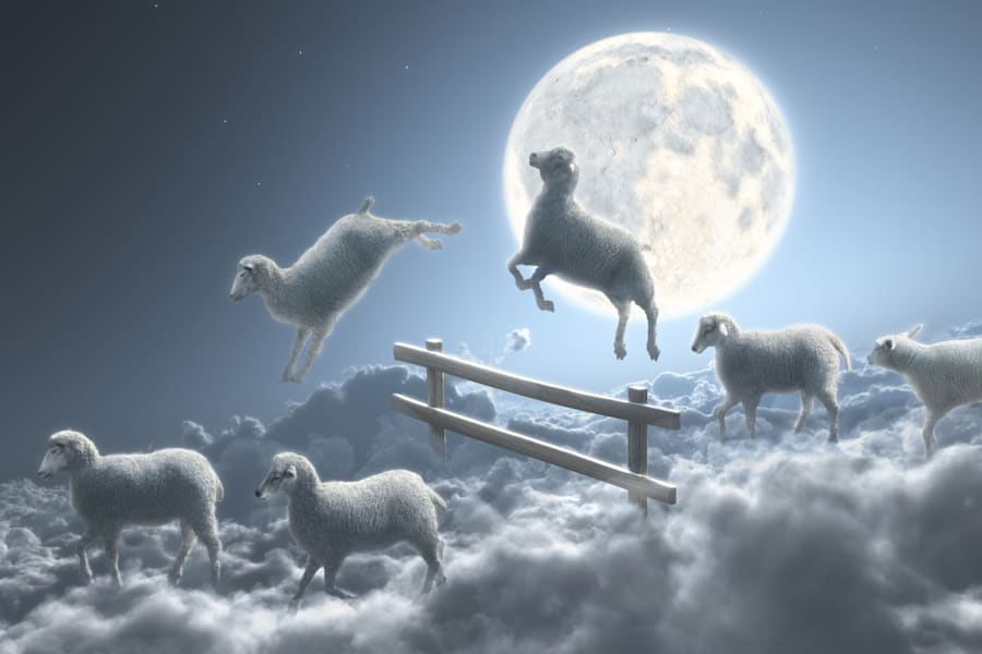 You, dear sheep, do not