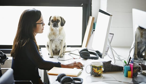 Businesswoman on computer with dog on desk