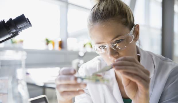 Focused scientist using tweezers in petri dish