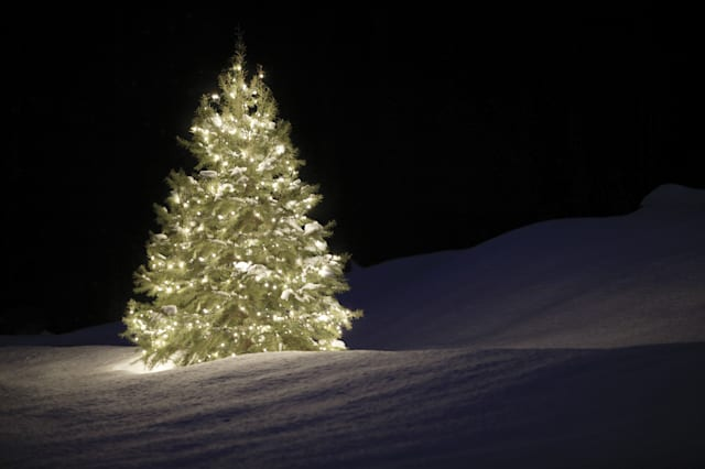Bargain Christmas trees at B&Q