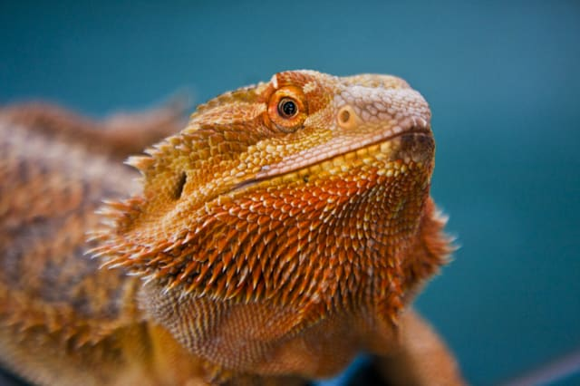 Weird and wonderful pet insurance claims