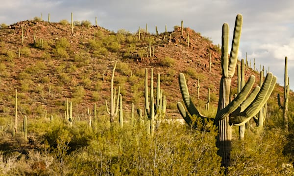 arizona's saguaro national park