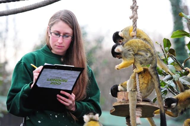 London zoo meerkat keeper Caroline Westlake guilty of glassing monkey keeper over llama keeper
