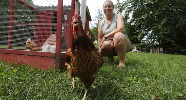 Homes-Ready For Chickens