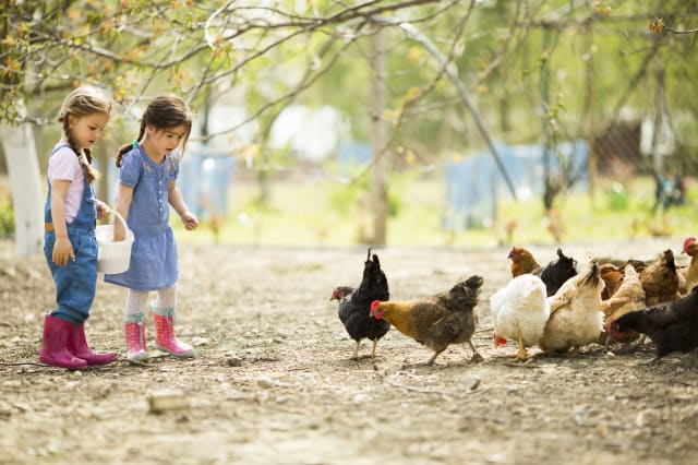 Cheap and cheerful family-friendly farm staycations